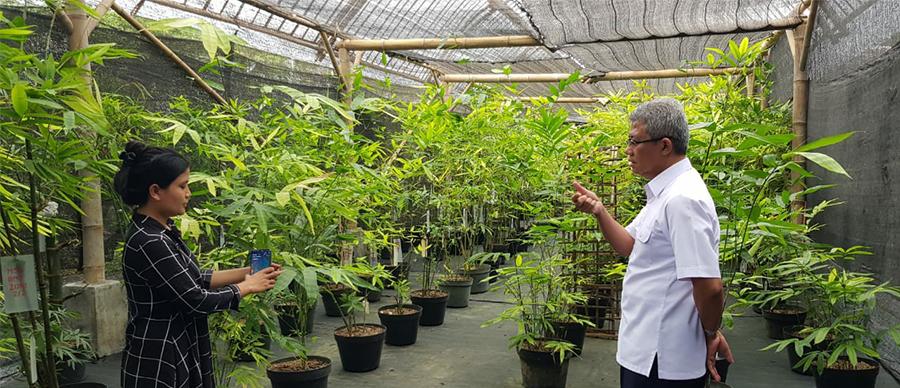 Kunjungan Dirut PT TMJ ke PT Bambu Nusa Verde (pengembang bambu) di Pakem, Yogyakarta,